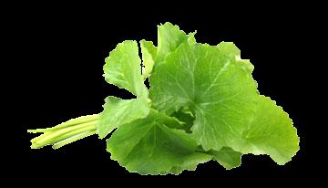Herb Item